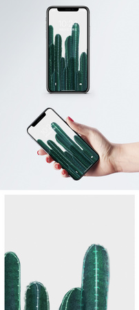 北欧仙人掌手机壁纸图片