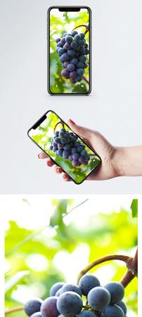 水果葡萄手机壁纸图片