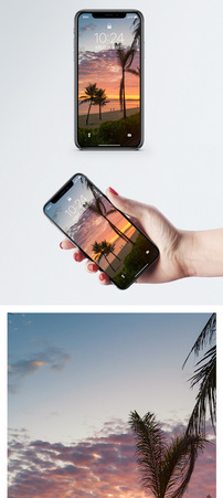 椰影成林手机壁纸图片