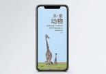 关爱动物手机海报配图图片