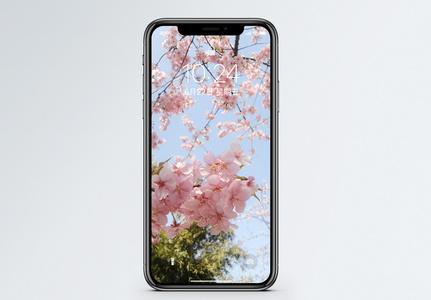 樱花手机壁纸图片