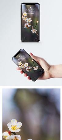 梨花手机壁纸图片