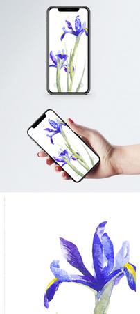 马兰花手机壁纸图片