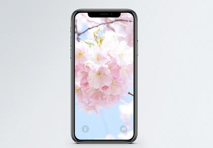 樱花盛开手机壁纸图片