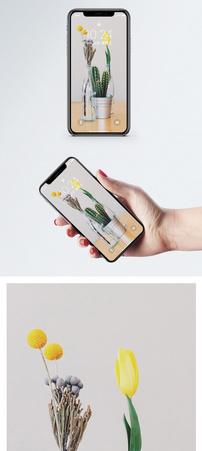 清新盆栽手机壁纸图片