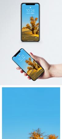 风景树林手机壁纸图片