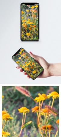 秋天金盏菊手机壁纸图片