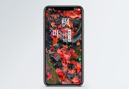 枫叶传情手机海报配图图片