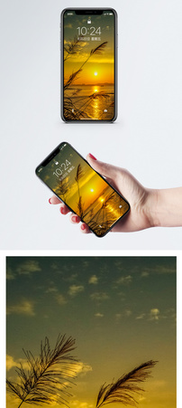 夕阳下的芦苇手机壁纸图片
