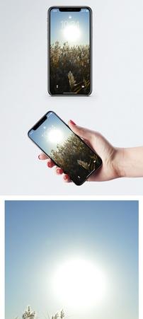 阳光下的芦苇手机壁纸图片