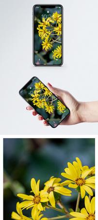 日本小黄花手机壁纸图片