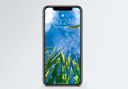 麦田手机壁纸图片