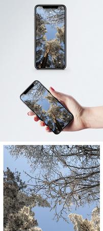 黄山雪景手机壁纸图片