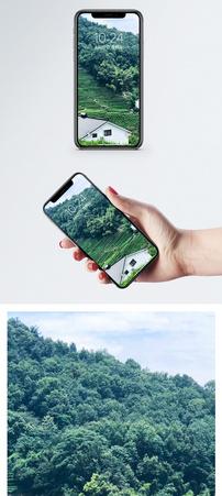 西湖龙井村手机壁纸图片