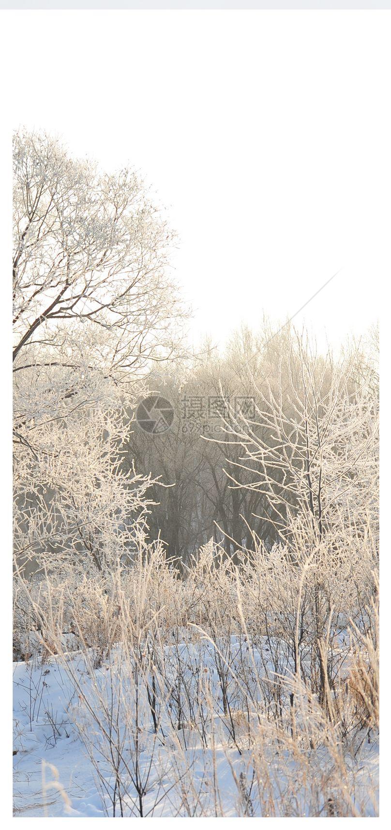 雾凇雪景手机壁纸图片