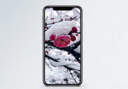 冬日梅花手机壁纸图片