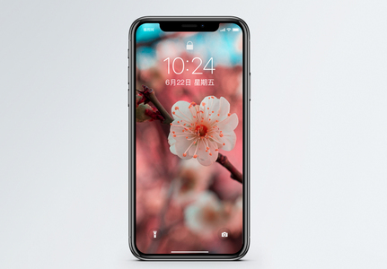 梅花手机壁纸图片