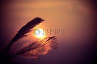 落日下的羽毛图片