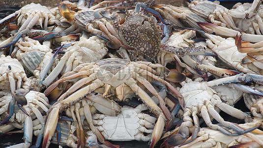 一大片螃蟹图片