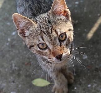 美丽可爱的猫科动物图片