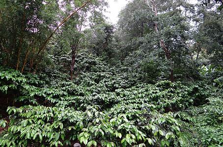 山间的小树林图片