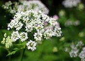 美丽的草原植物图片