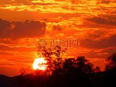 夕阳下的婆娑树影图片