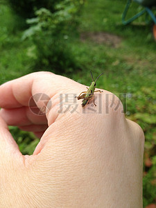 受伤的小虫子图片