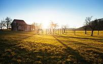 金色的原野图片