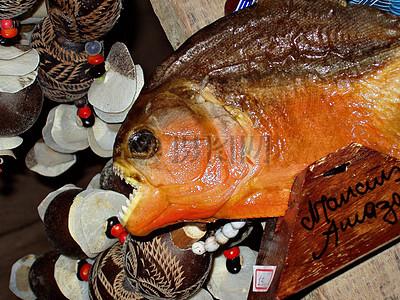 亚马逊食人鱼图片