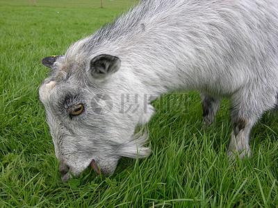 草食动物雕塑