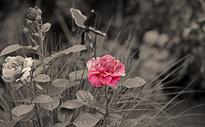 灰色的植被和红色的花朵图片