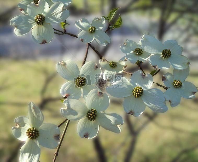 盛开在春天的花朵图片