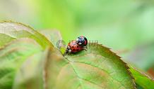 阳光下的甲虫图片