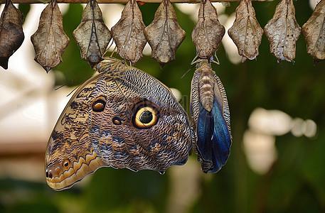 一排破茧成蝶的蝴蝶图片