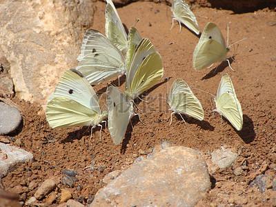 沙地上的蝴蝶图片