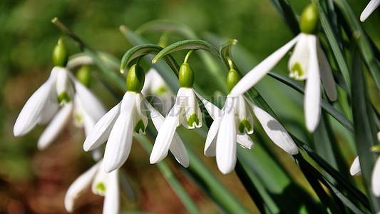 春天高清图片