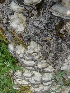 阳光下的菌菇图片