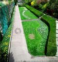 城市花园的草坪图片