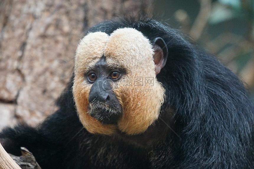 壁纸 大熊猫 动物 860_574