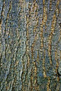阳光下的干树皮图片