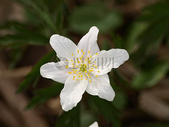开放的白色花卉图片