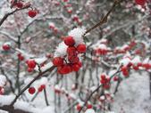 冬季树林中的果实图片