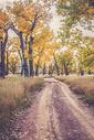 落叶缤纷的山间小道图片