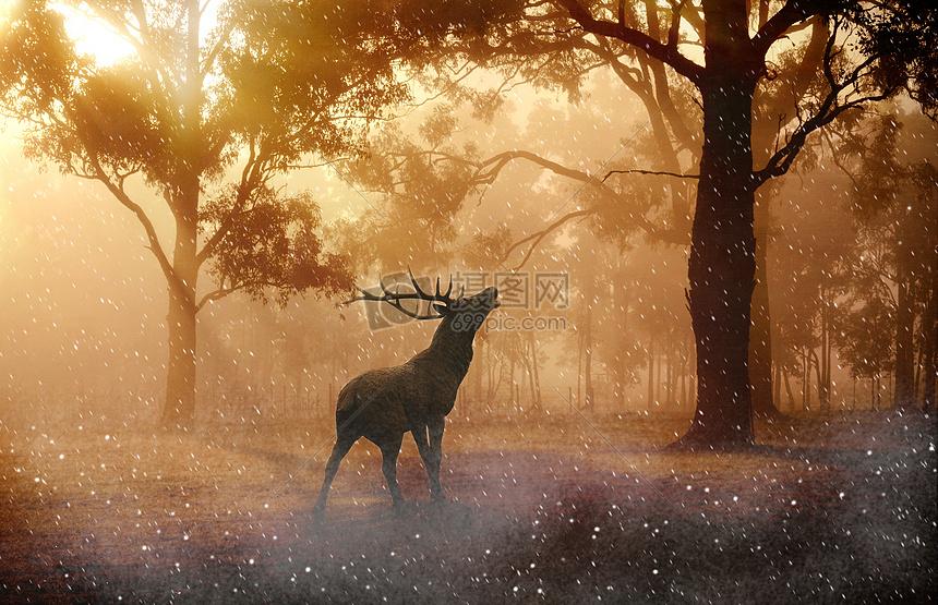 鹿阳光树林清新背景图片