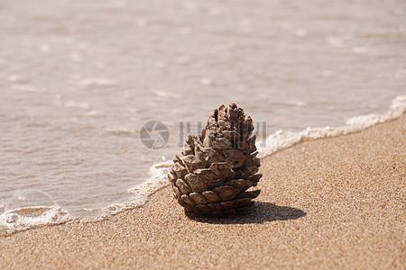 海滩上的松球果高清图片