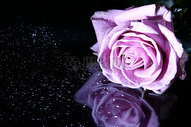 美丽的粉色鲜花图片