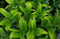 茂盛的绿色植物图片