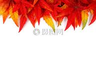 红色鲜艳的秋天叶子图片