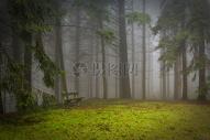 梦幻森林里的木椅图片